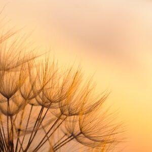 Fototapet Blommor i morgonsol MIDAL